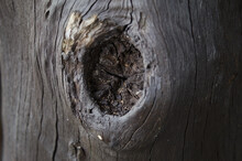 Knot On A Grooved Tree Trunk