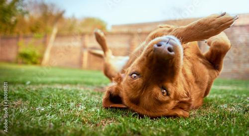 Fotografie, Obraz Playful dog