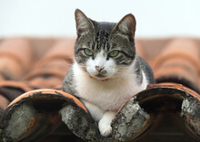 A Green-eyed Tabby Watches The...