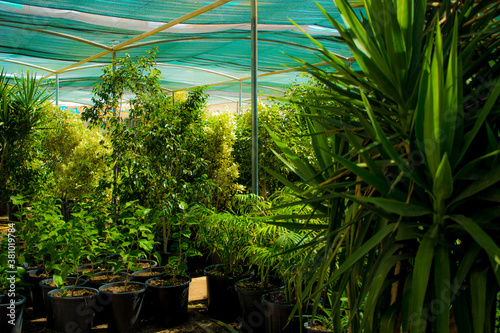 a botanic with green plants Canvas