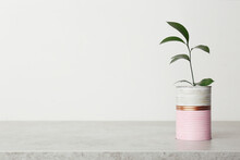 Beautiful Houseplant In Color Tin Can On Light Grey Stone Table. Space For Text