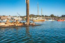 A Floating Dock With Sea Lions...