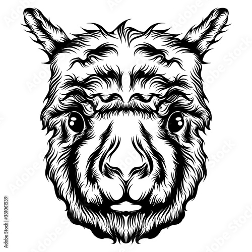 Naklejka premium The single head alpaca tattoo animation