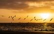 Beautiful shot of birds morning flight during the sunrise