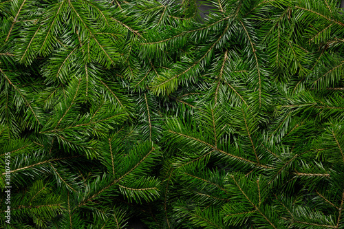 Fototapeta Fir branch background obraz