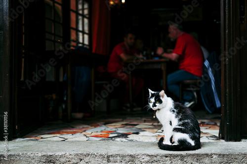 Leinwand Poster Chat de gouttière noir et blanc dans la rue