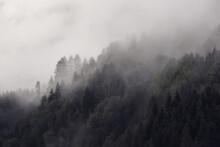 Albero Bosco Con Nebbia Forest...