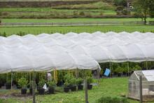 Serra Serre Verde Coltivazioni Piante Orti Agricoltura Agricoltore