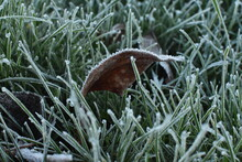Close Up Of Frosty Blades Of G...