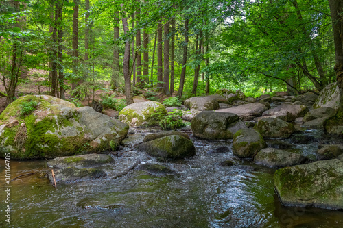 nature reserve in the Bavarian Forest Canvas Print
