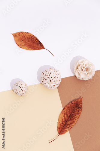 Fall Winter background autumn ball and leaf decor. Trendy pastel beige brown color shades.  Stylish autumn minimalistic trendy wallpaper