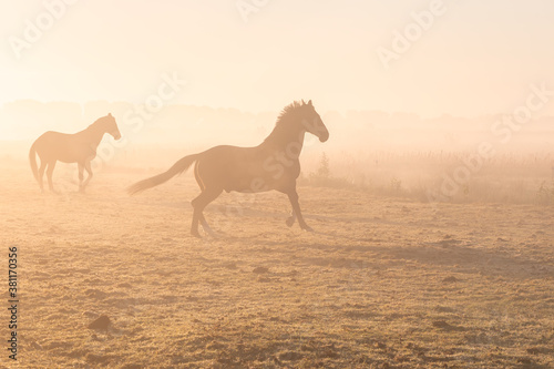 galloping horses on misty pasture Fotobehang