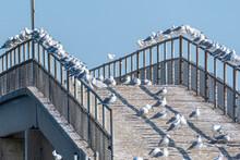 Sea Gulls Crowded Onto Fishing Pier Near Water On Summer Day