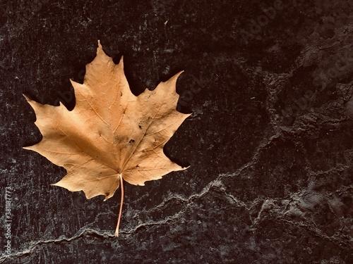 Cuadros en Lienzo une feuille d'érable sur le bitume en automne