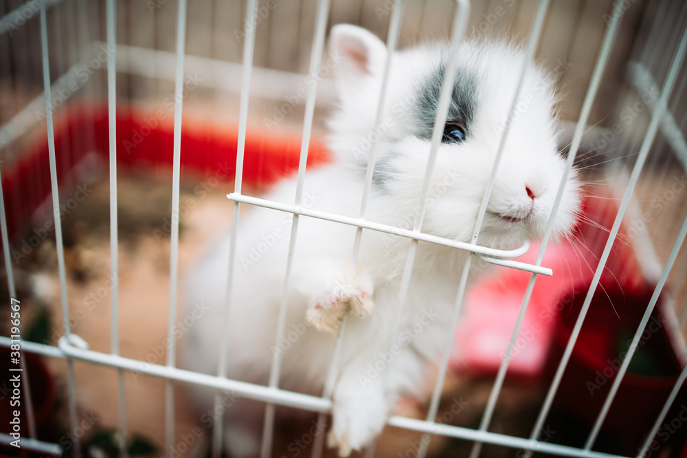 Little white rabbit inside in an metal cage. Picking through the wires