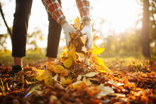 Close Up Of A Male Volunteer Collects And Grabs A Small Pile Of Yellow Red Fallen Leaves In The Autumn Park. Cleaning The Lawn From The Old Leaves. Gardening And Seasonal Communal Work Concept.