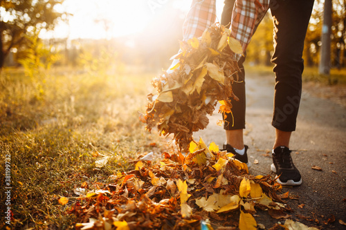 Fotomural Close up of man's hands collecting a pile of yellow and red old fallen leaves near the park alley