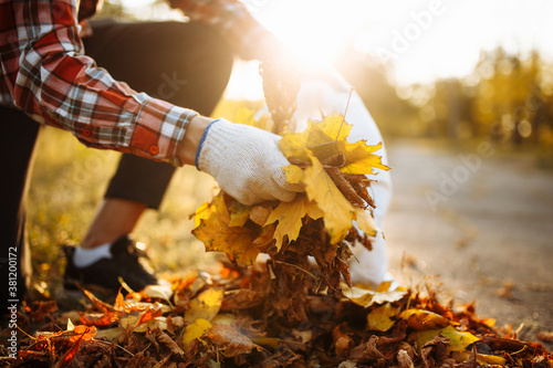 Male volunteer grabs a pile of fallen leaves and puts them into a garbage bag in the park Fotobehang