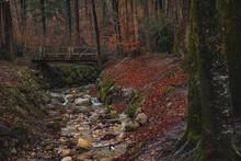 Autumn Dark Forest Soft Focus ...