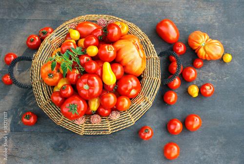 Fototapeta Kolorowe pomidory w koszyku - różne odmiany obraz