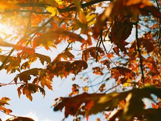 Bright Orange Autumn Fall Leaves On Crisp Day Against Blue Sky