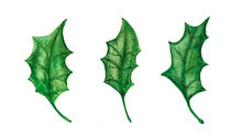 Clipart Of Three Green Holly L...