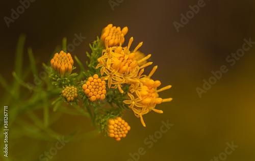 Fototapeta Pola i łąki to zazwyczaj świat tak małych, pięknych roślin. obraz