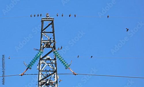 Fotografie, Obraz Energetic pylon with a lot of starlings