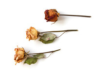 Dried Red And Yellow Rose Flower Isolated On White Background