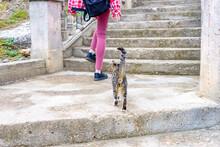 Female Legs And Little Kitten ...