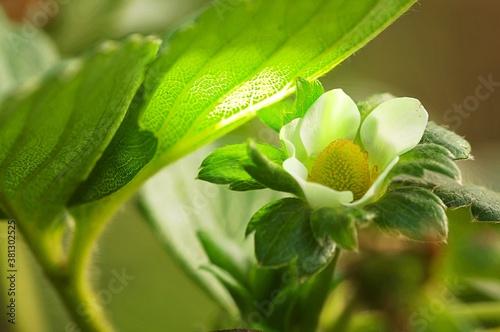 Obraz na plátně fresa verde