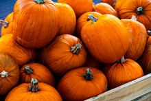 Pile Of Ripe Orange Pumpkins R...