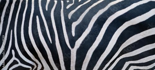 Naklejka premium Natural texture of the zebra skin.