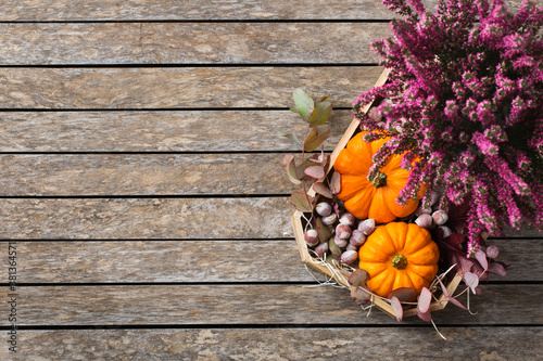 Fototapeta Autumn fall thanksgiving day floral composition with pumpkins and heather obraz