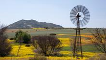 Windmill In Blooming Desert