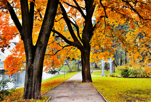 Autumn morning in old  public botany park, Europe, Fototapeta