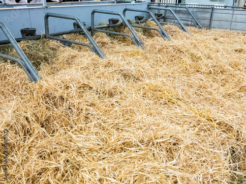 Empty cow stable stall block with fresh straw but no more animals. Agriculture crisis concept