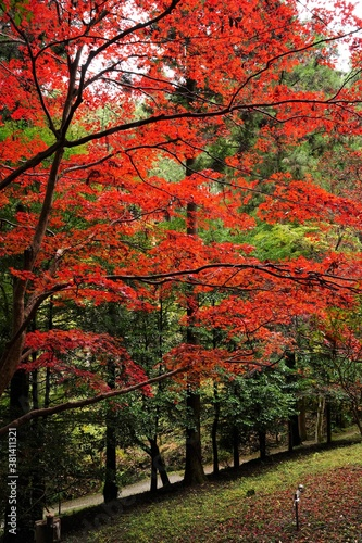 Red and yellow autumn color leaves and stairs are in mountain in Chichibu, Saitama, Japan. Red maple festival is in November.