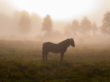 The Horse Grazes In The Meadow...