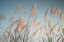 Flow Of Grass Flowers In Early Morning Sky Background. Quiet And Calm Image In Zen Mood. Spring And Summer Aesthetic Background.