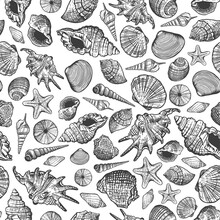 Sea Shells Vector Seamless Pat...