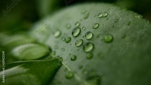 Fotografie, Obraz Macro rain drop on green leaves. Selective focus.