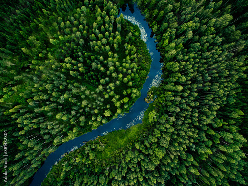 Aerial view of green grass forest with tall pine trees and blue bendy river flowing through the forest