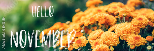 Hello November text with bouquet of orange chrysanthemum flowers in pot in garde Wallpaper Mural