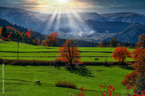 Colorful autumn sunset in the mountains. Animals grazing in the grass. The most beautiful colors of autumn in Savsat Artvin