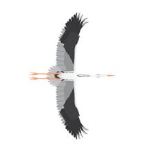 Ardea Cinerea - Grey Heron - In Flight - Ventral View - Flat Vector Isolated