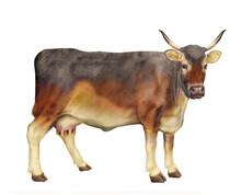 Vache Laitière, Animal, Ferme...