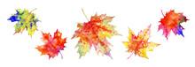 Set Of Multicolored Maple Leav...