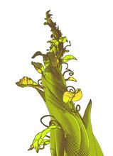 Green Drawing Beanstalk Illust...