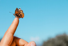 Orange Butterfly On Hand With A Blue Sky At The Background